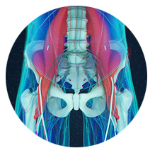 surrounding glute muscle - Unlock Your Glutes – Conversion Monster!